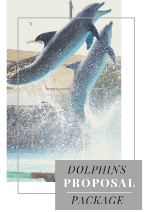 Dolphins Proposal in Portugal
