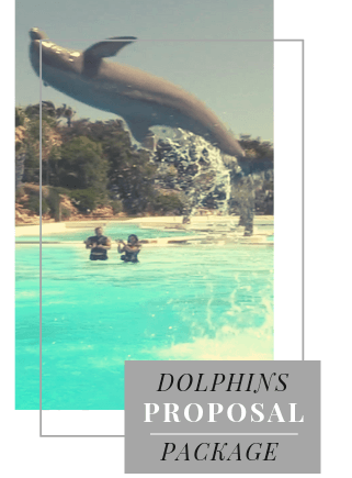 Dolphins proposal Package