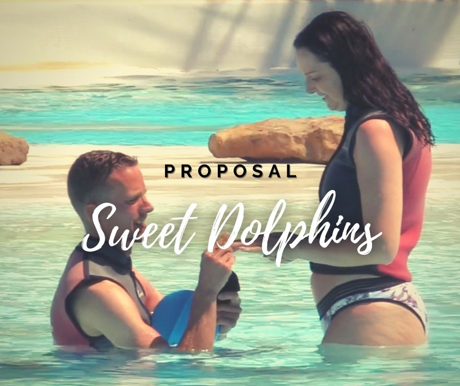 Dolphin Swim Proposal Package Portugal