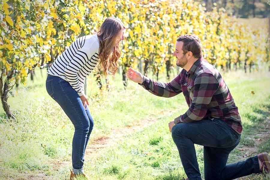 Vineyard Proposal Package in Portugal