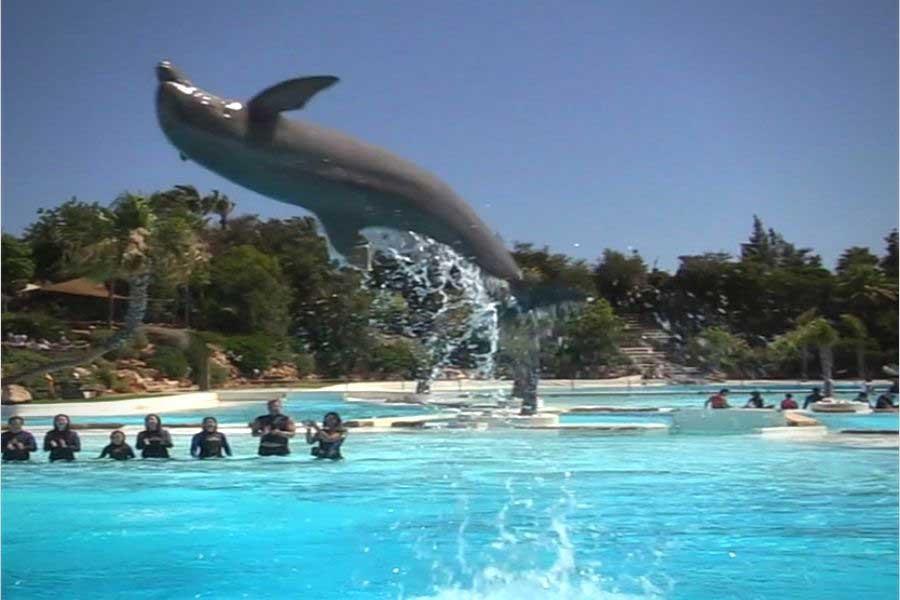 Pacote Pedido de Casamento com Golfinhos